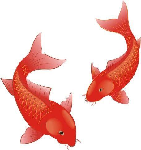 放生红鲤鱼
